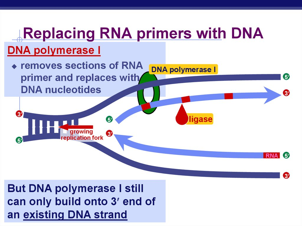 Replacing RNA Strand with DNA